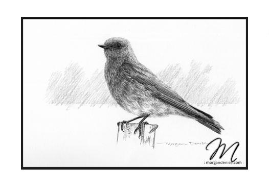 gallery2-bird