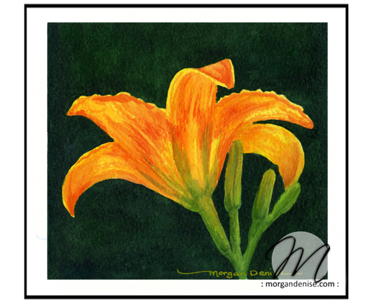 gallery2-lily